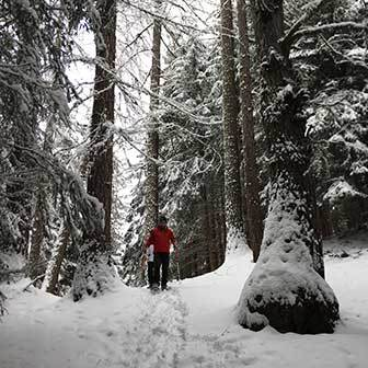 Snowshoeing in the Cortina d'Ampezzo Woods